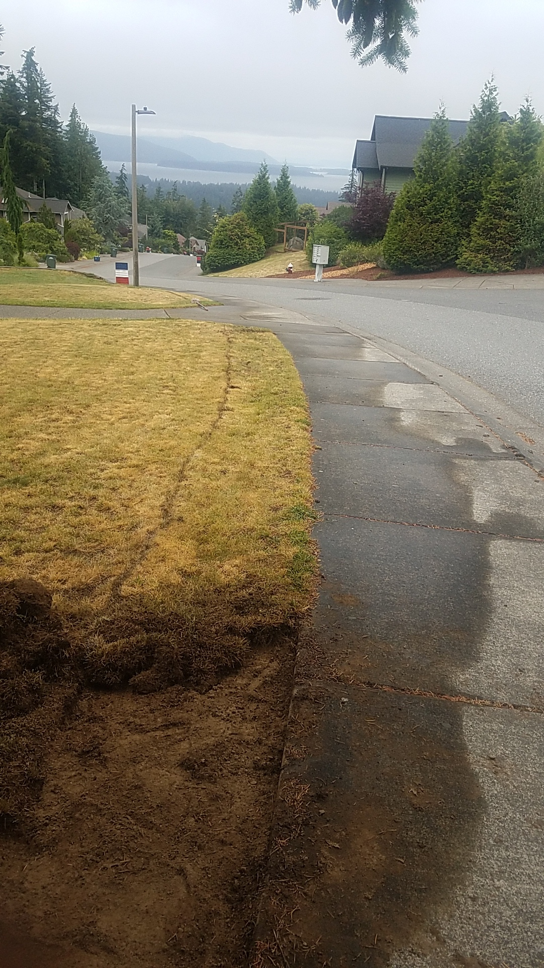 BEFORE- SIMPLE GRASS LAWN TO SIDEWALK