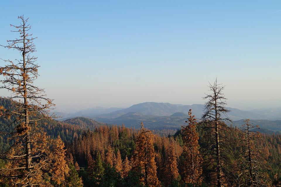 Kings Canyon National Park.JPG