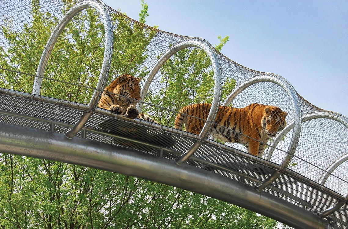 Philadelphia Zoo - Tigers.JPG