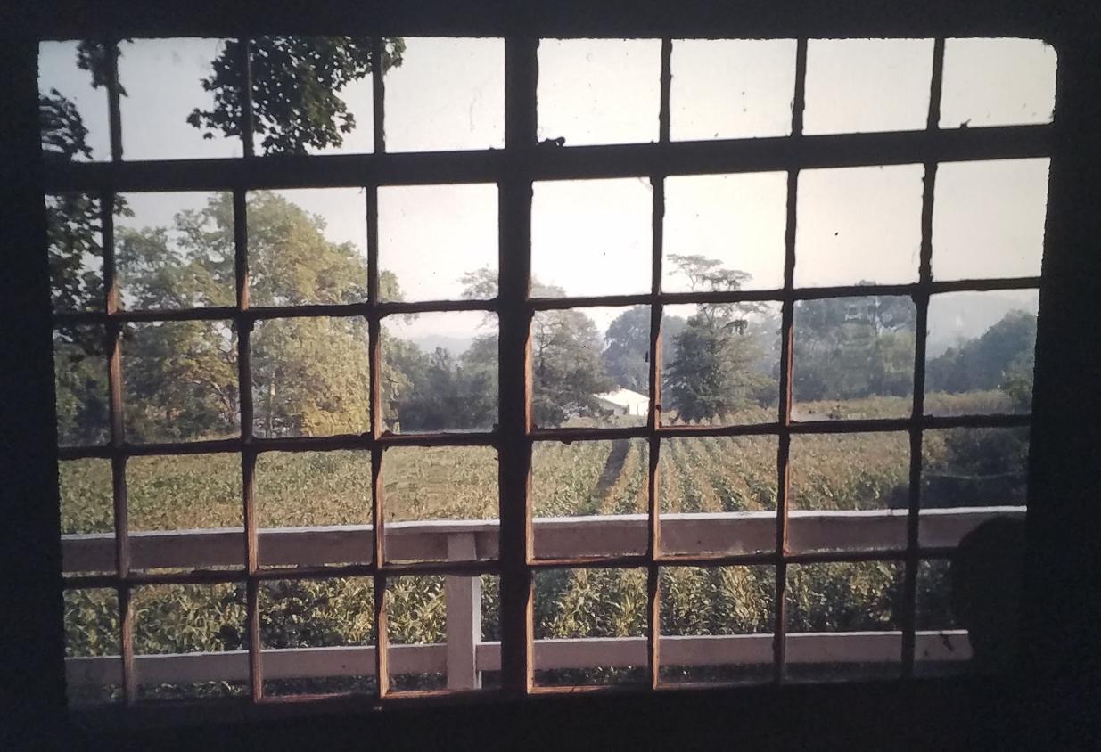 Corson Farm - Cornfields - 1982.JPG