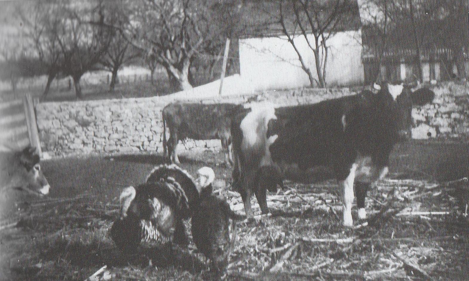 Corson Farm - 2.JPG