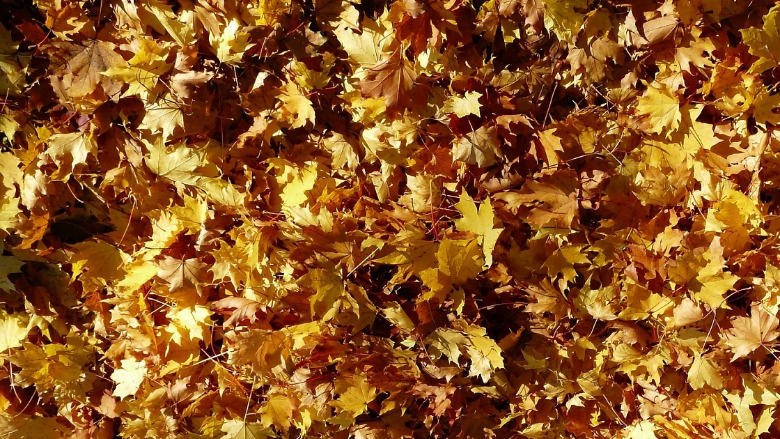 Glenside Local: Jenkintown Borough Leaf Collection