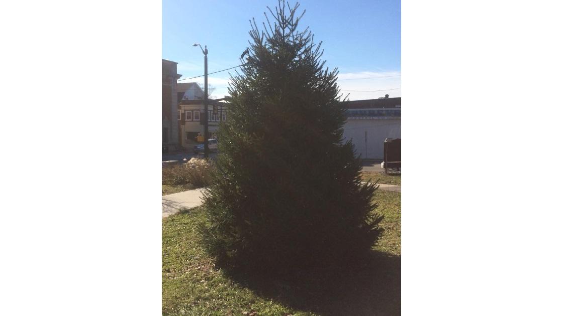 Glenside Local: Glenside Christmas Tree Lighting In Cheltenham Township