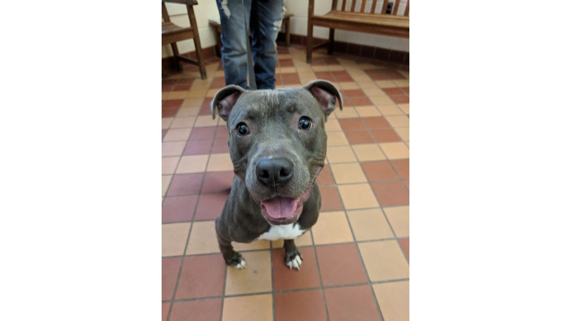 The Tookany Valley Chronicles: Pet Adoption Edition - Lucci