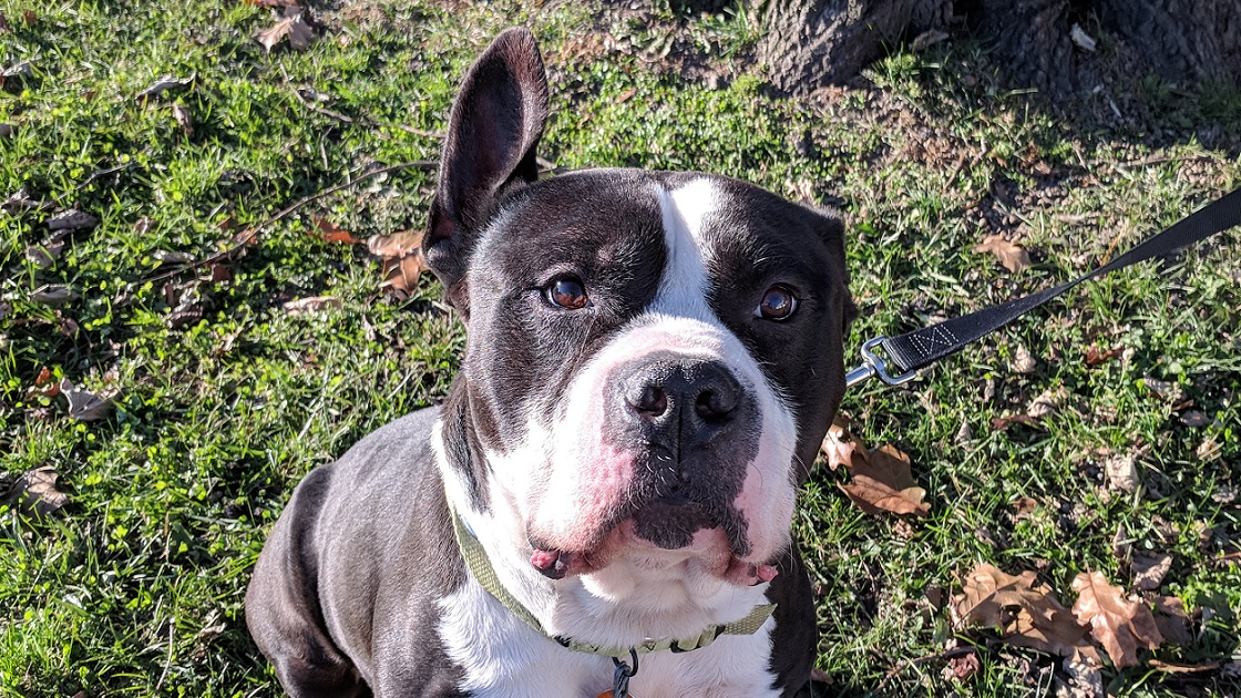 The Tookany Valley Chronicles: Pet Adoption Edition - Sultan
