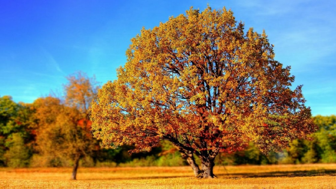 Glenside Local: Abington Township Shade Tree  Commission Meeting - December 12th