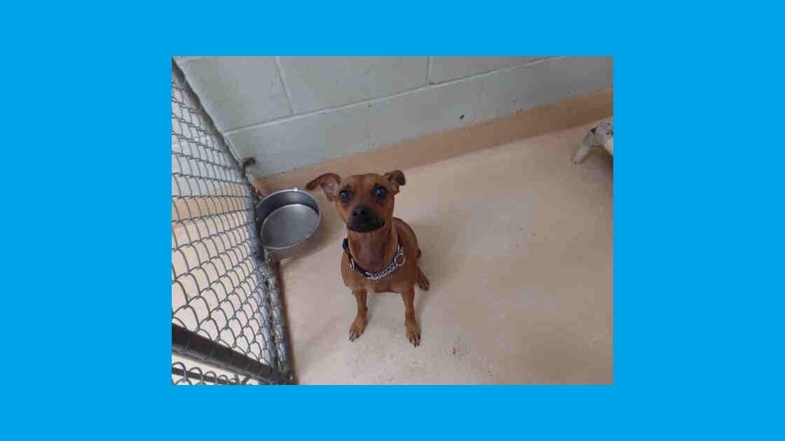 The Tookany Valley Chronicles: Pet Adoption Edition - Houdi