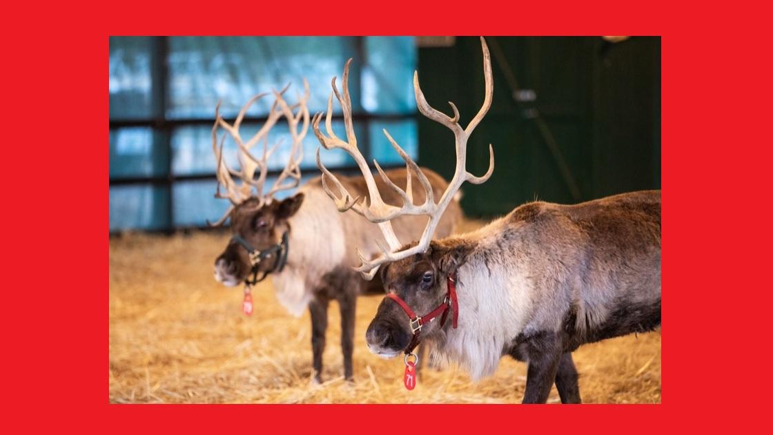 Glenside Local: Santa's Reindeer Receive Clean Bill of Health