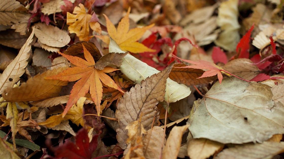 Glenside Local: Yard And Leaf Debris  Collection - Jenkintown