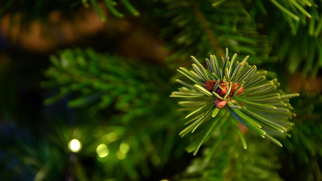 Glenside Local: Christmas Tree  Recycling In Cheltenham