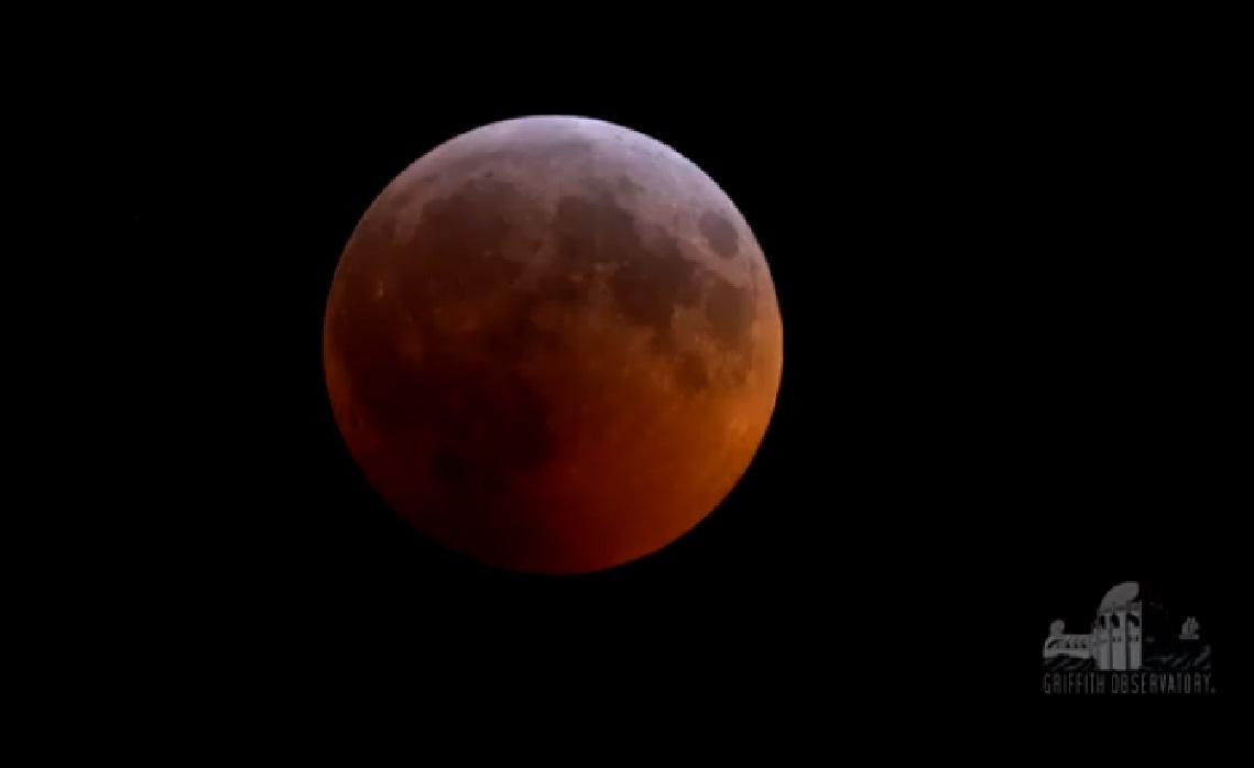 Glenside Local: Super Blood Wolf Moon
