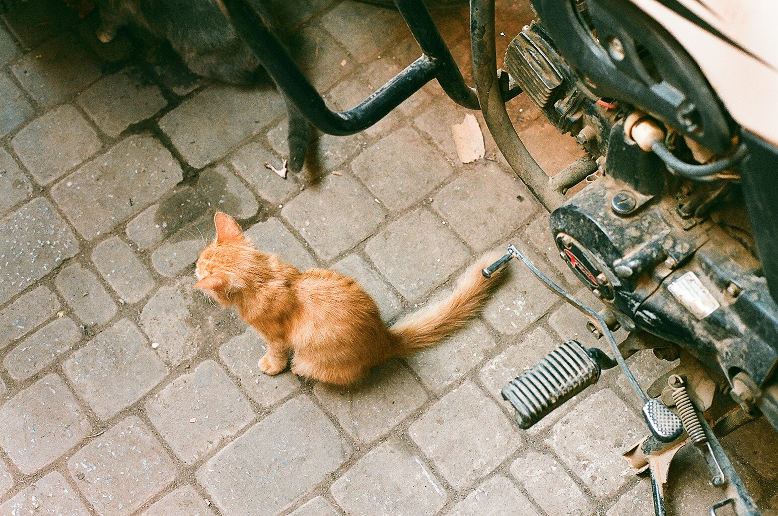One of the thousands cat that live within the Medina of Marrakech