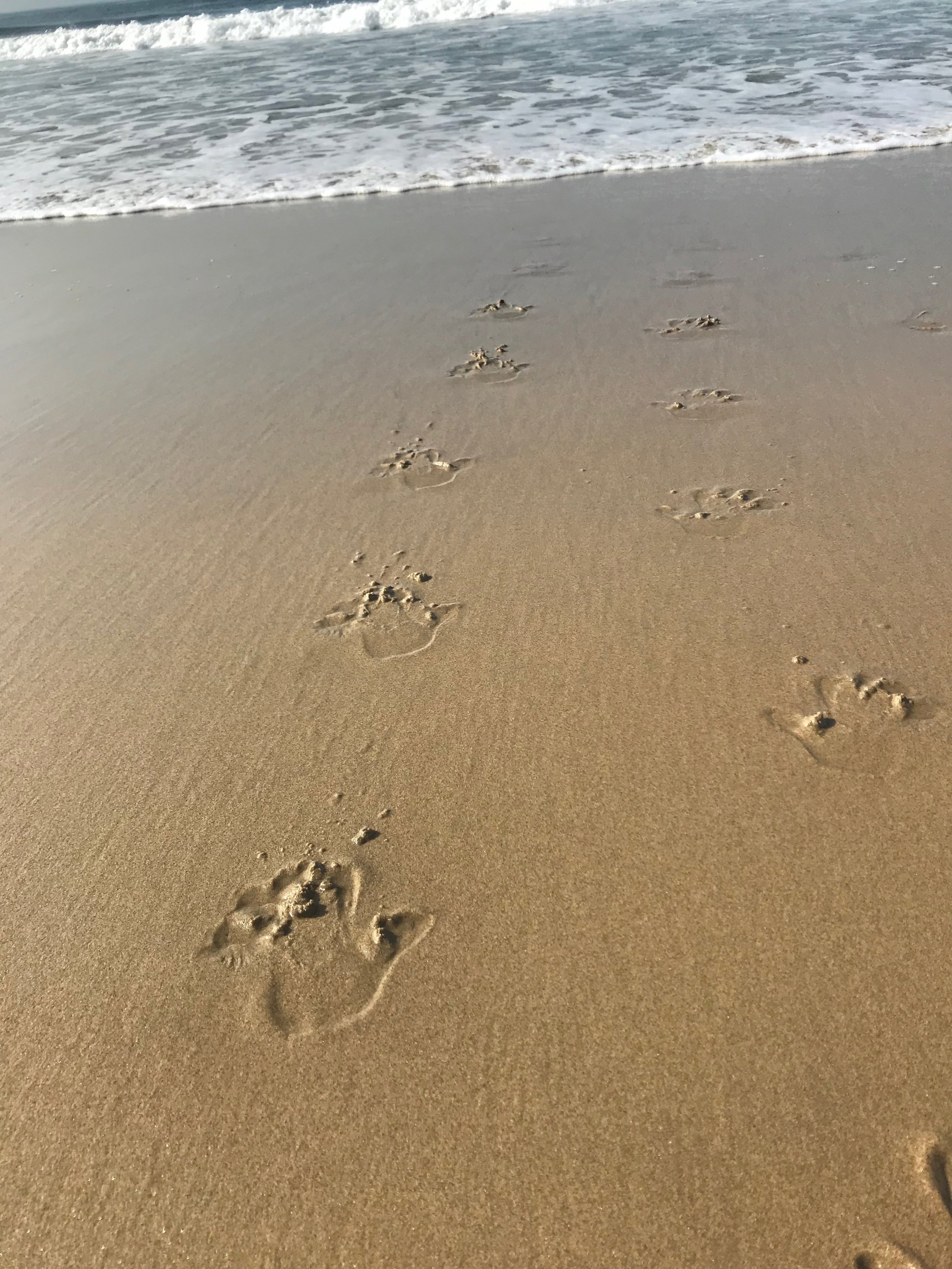 The prints I left in the sand that time I walked into the Pacific on my hands. (I came back.)