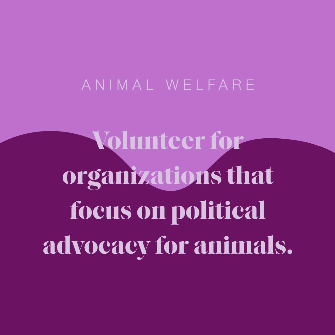 Genesis_Animal_Welfare_Alba.jpg