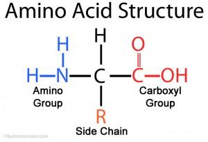 Amino-Acid-Structure.jpg