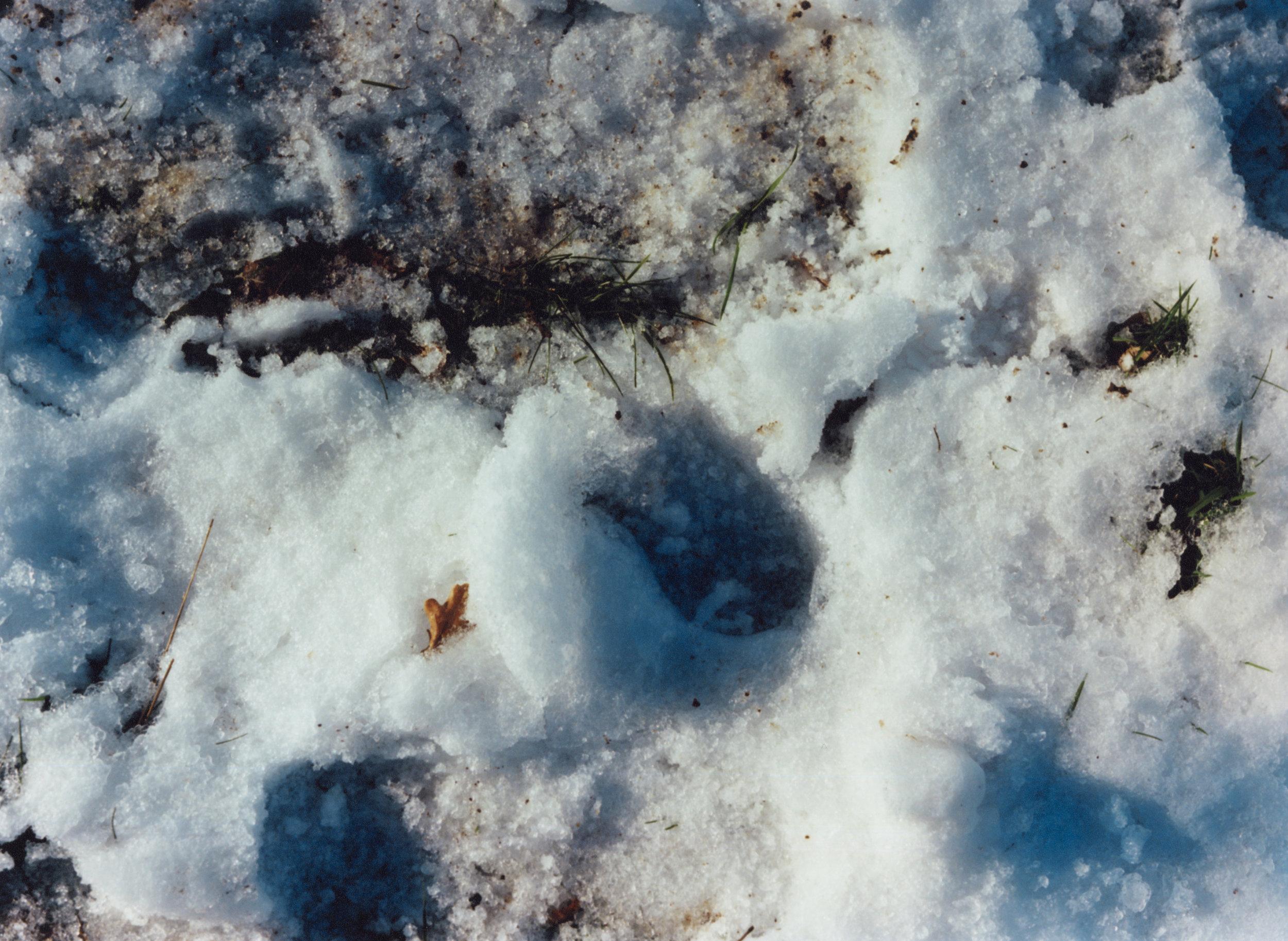 snow001.jpg