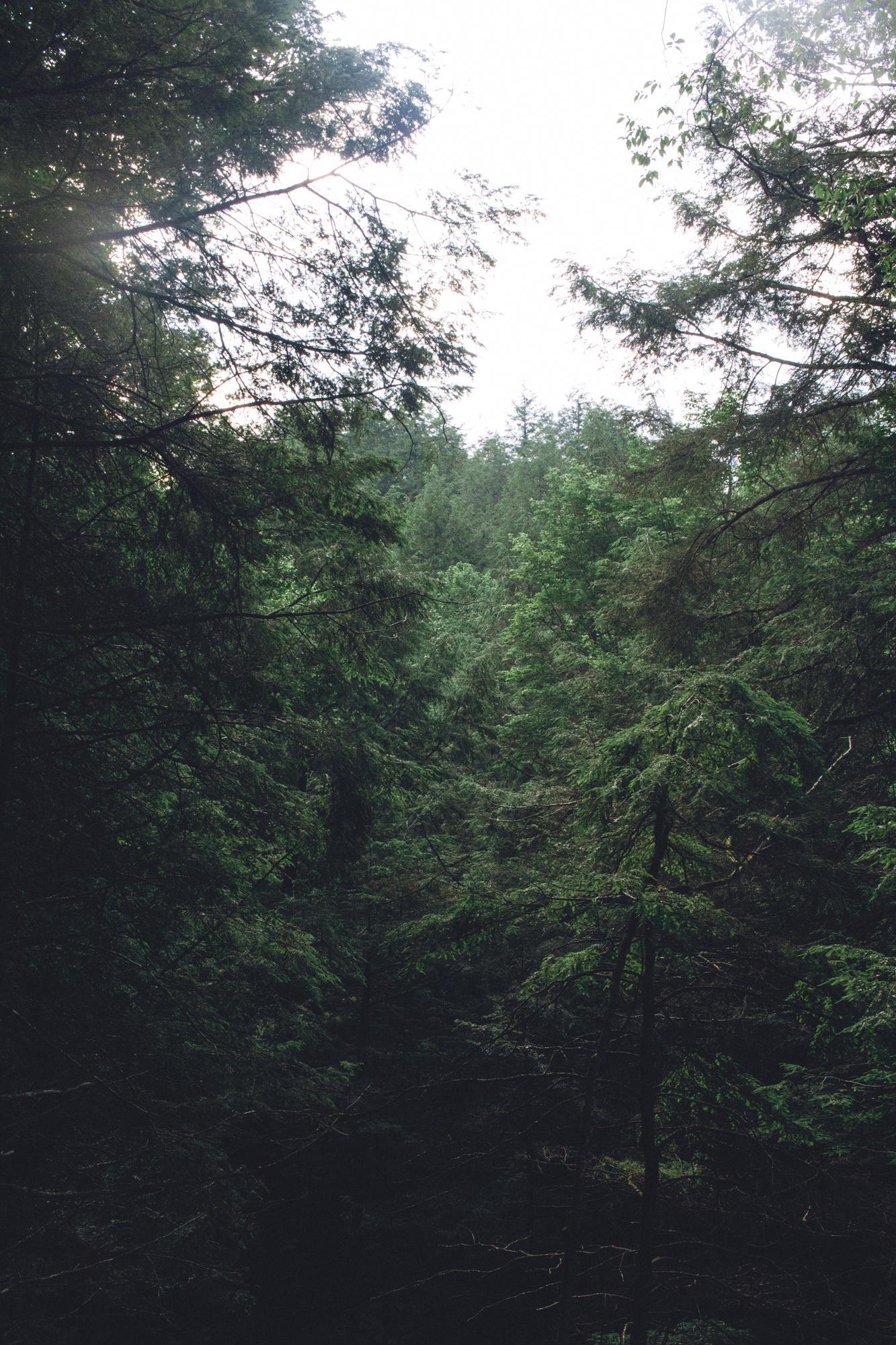 Hemlock Falls TAB_6966.jpg