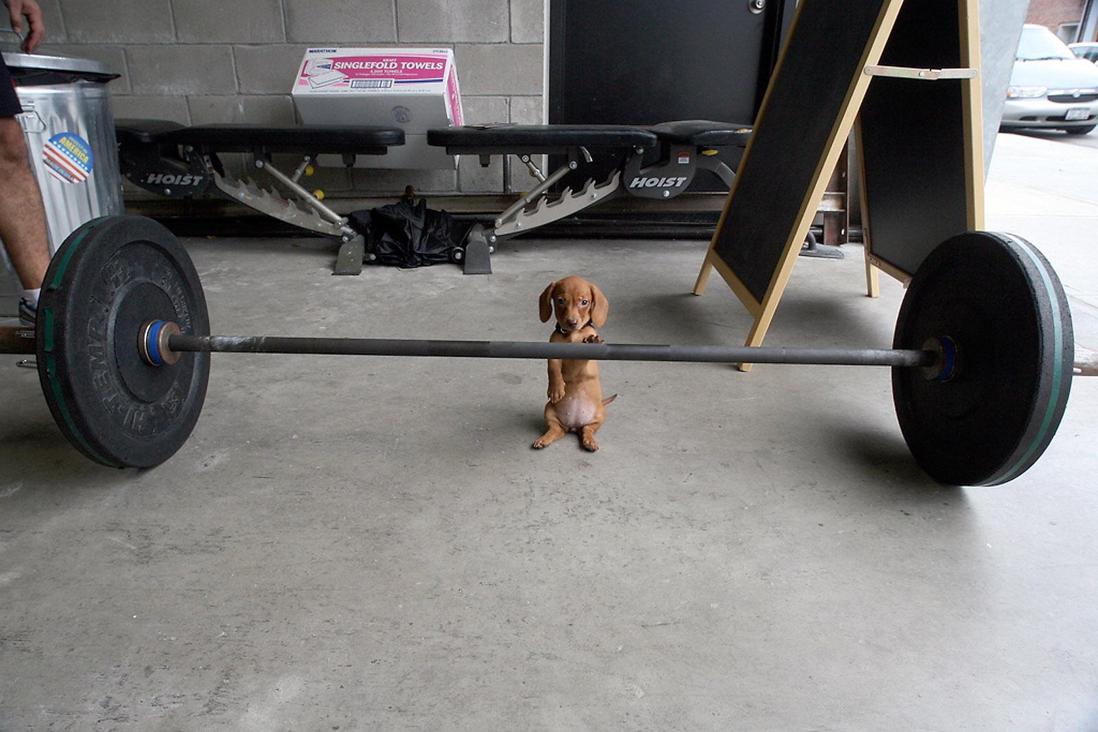 PuppyBarbell