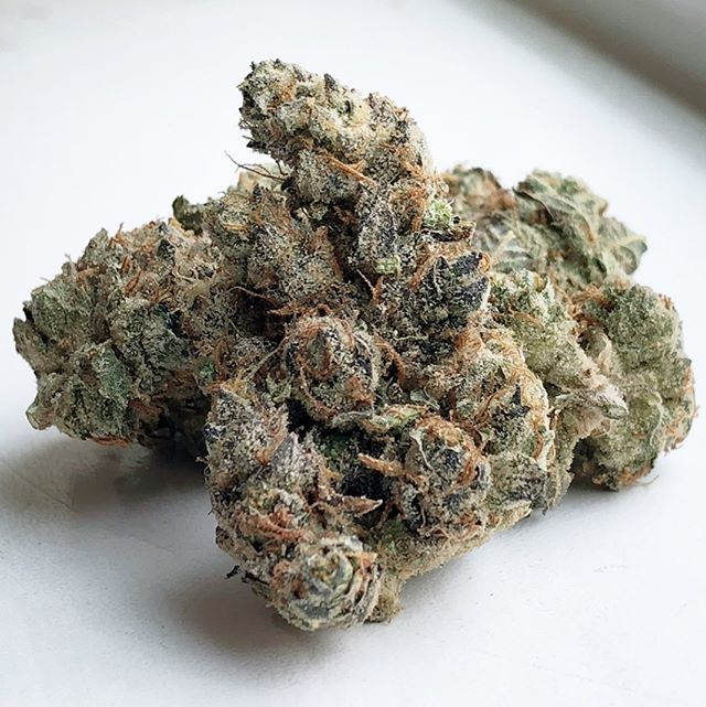This GMO from @pandafarms is some of the best we've ever had on the Platinum Shelf! Plus for the number chasers, this one tested at 33% THC! 🔥🔥🔥 . . . . #gmo #garliccookies #og #cookies #genetics #strains #buds #trichomes #thc #trichs #strongweed #hightester #dank #loud #doctorsorders