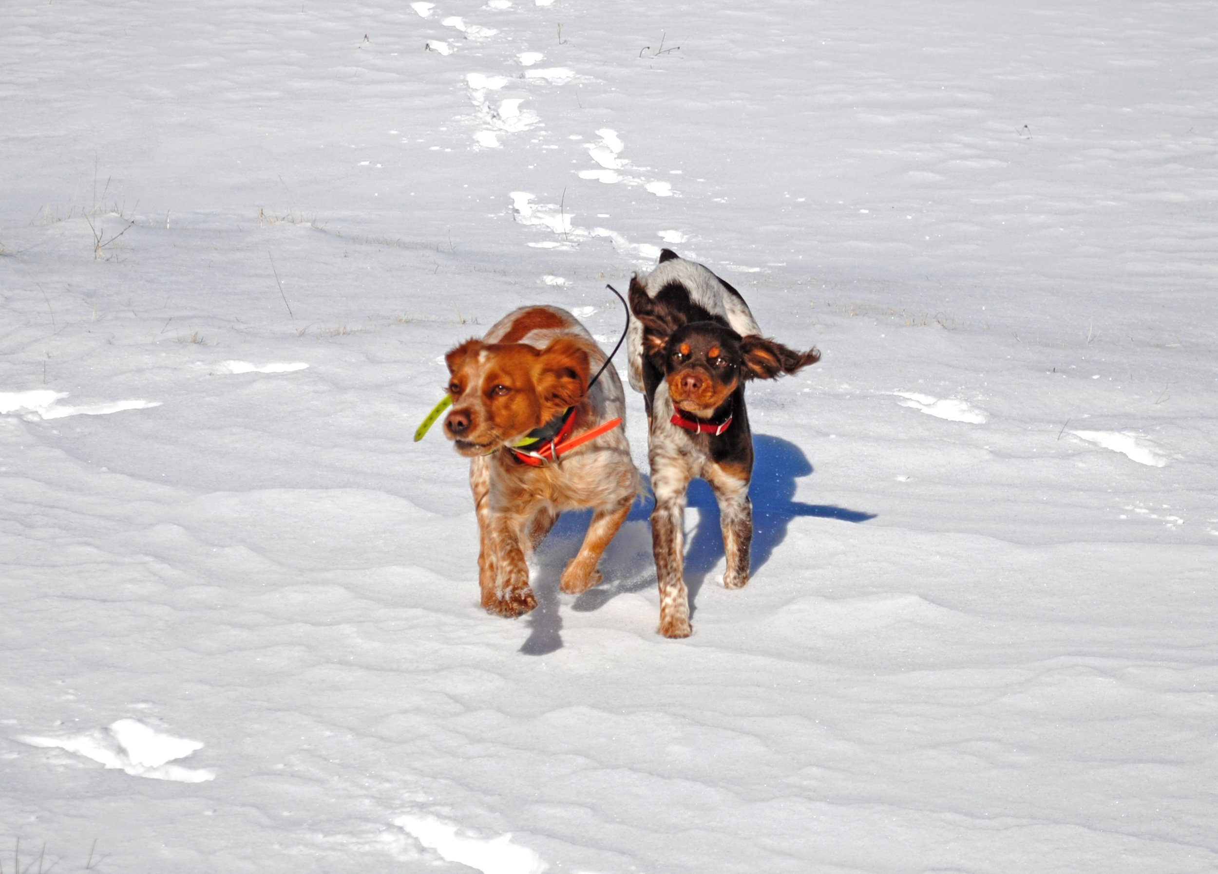Skylar and Nova in the snow (photo credit: Justin Madron)