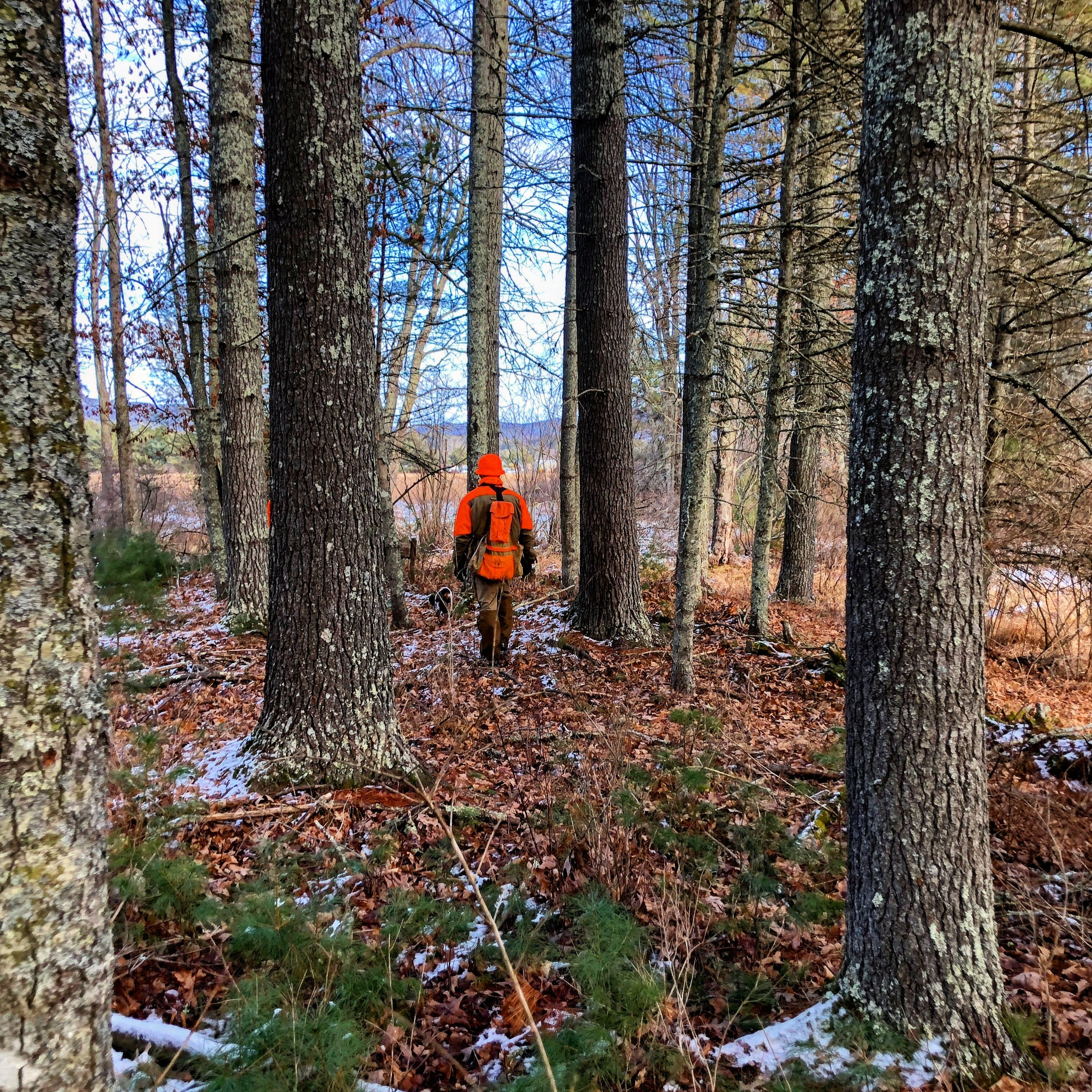 Chip on the low elevation hunt