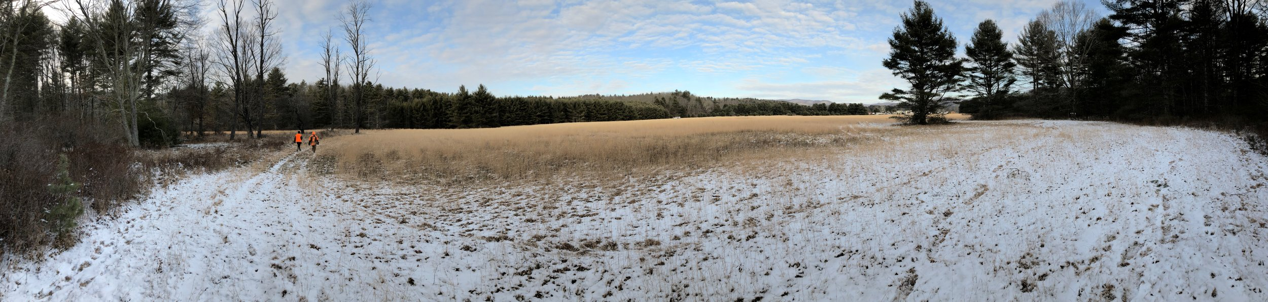 the field at the base of the state forest