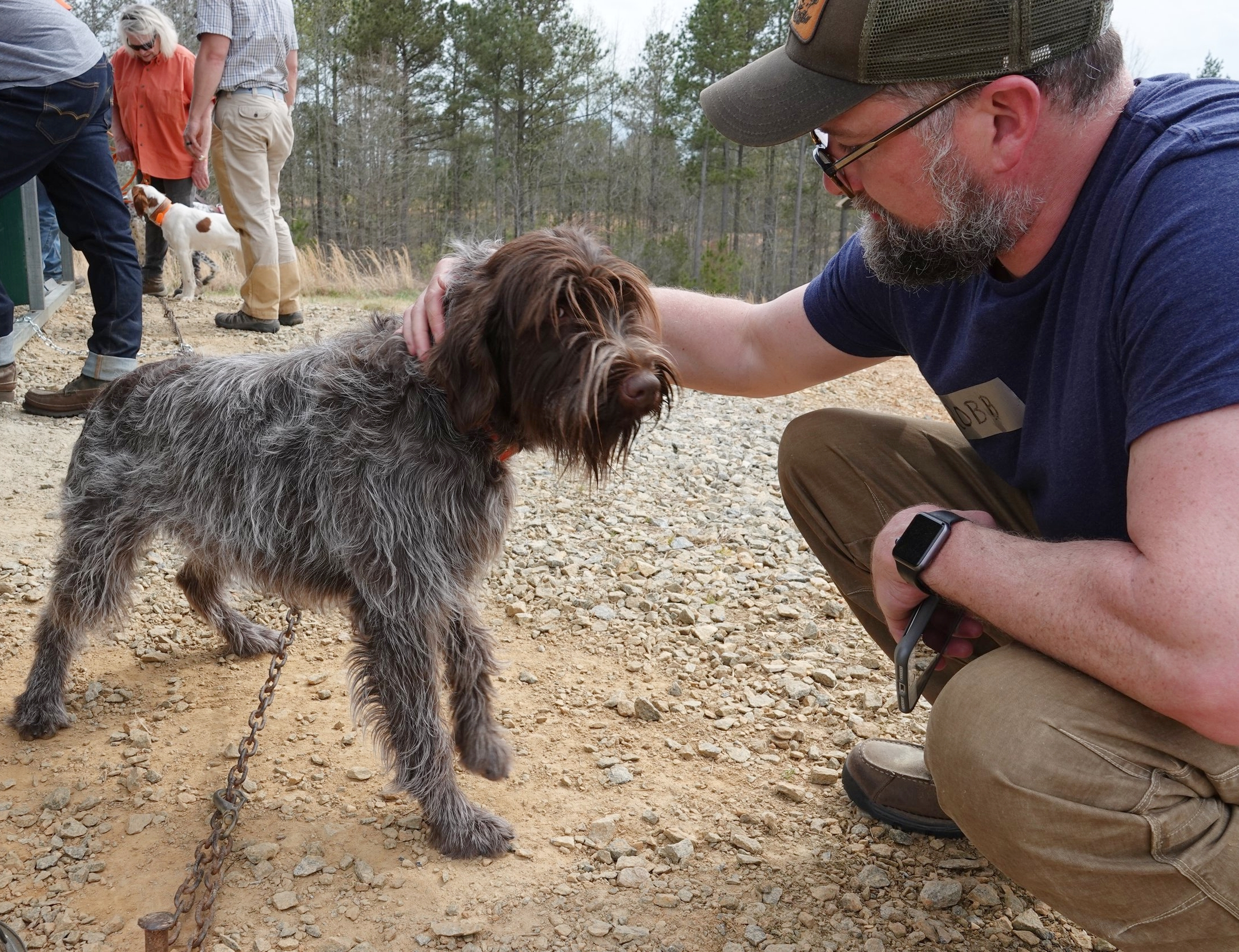 Uma, a gorgeous wire-haired pointing griffon from  Foggy Gap Griffons  in Boone, NC (photo credit: Chip Hidinger)