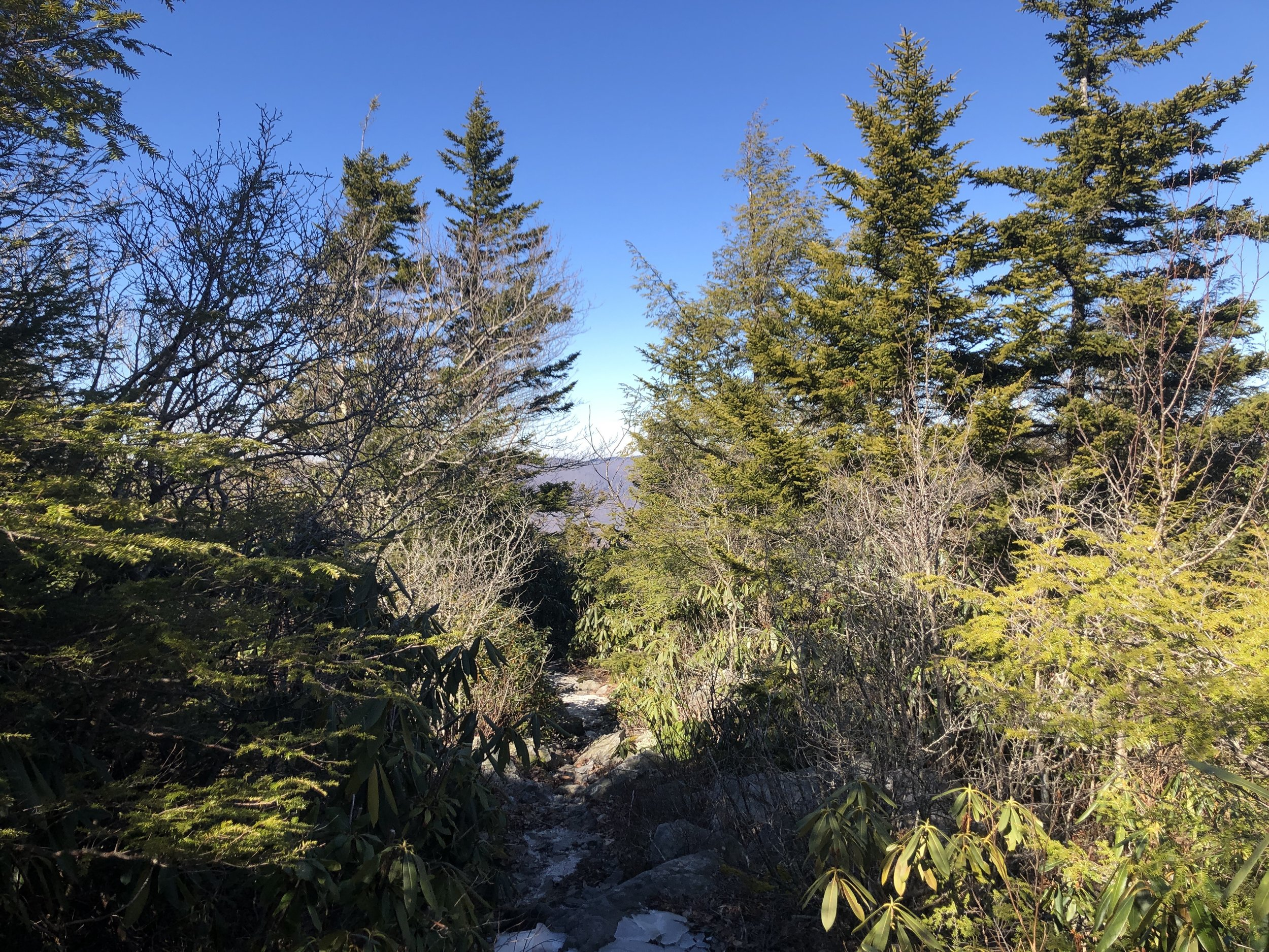 The landscape that held our first audible encounter with the Ruffed Grouse