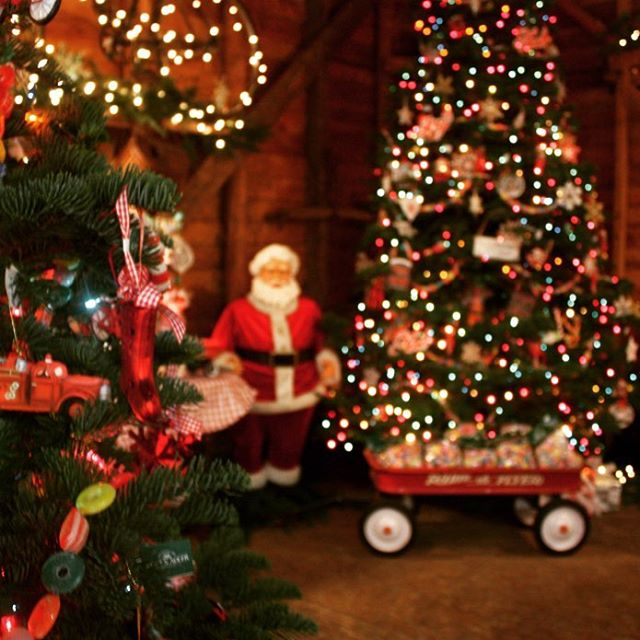 The barn is beautifully decorated! Come inside to warm up with a cup of cider and cookies. We also have ornaments, wreaths, holly and garland.