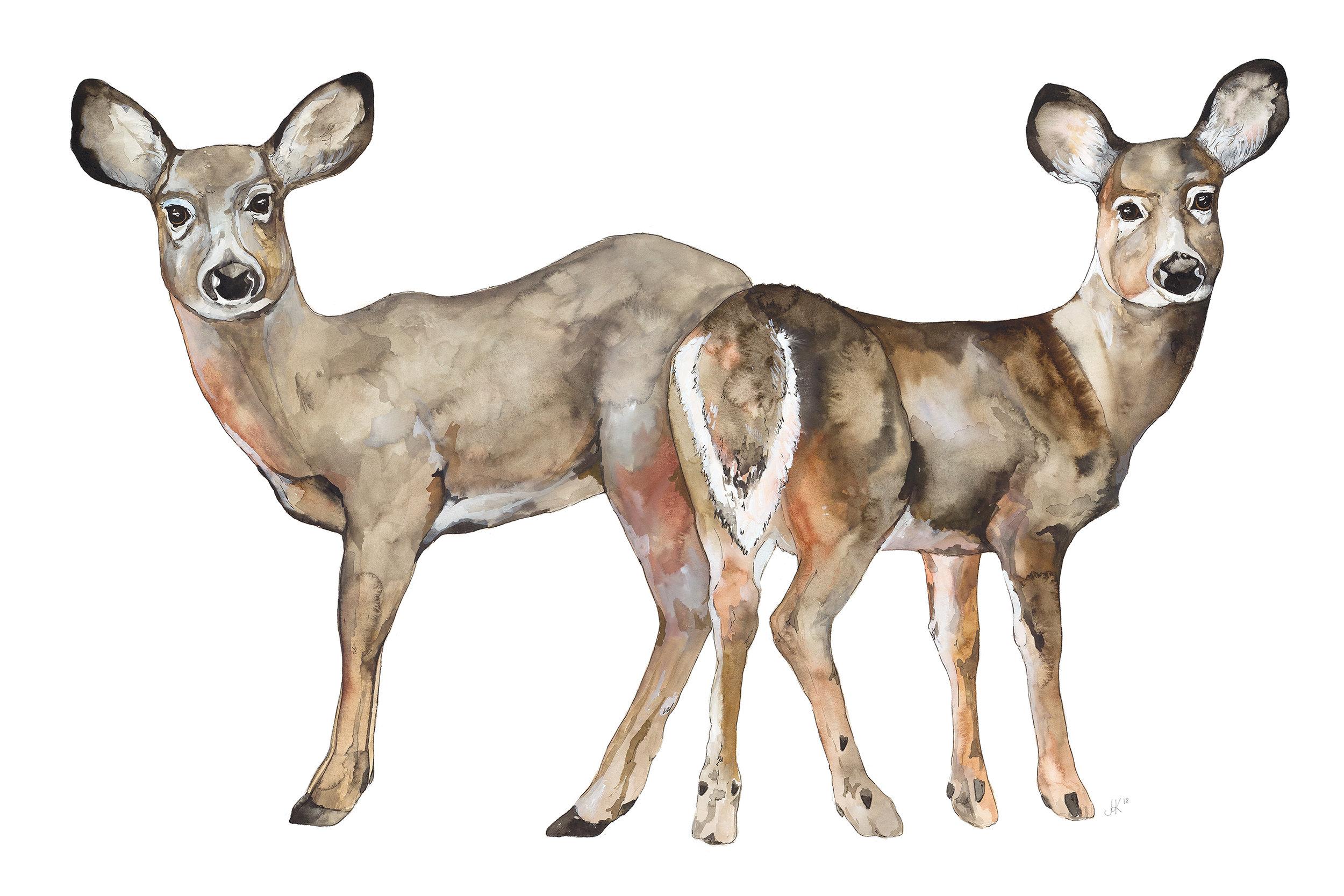 Two Deer.jpg