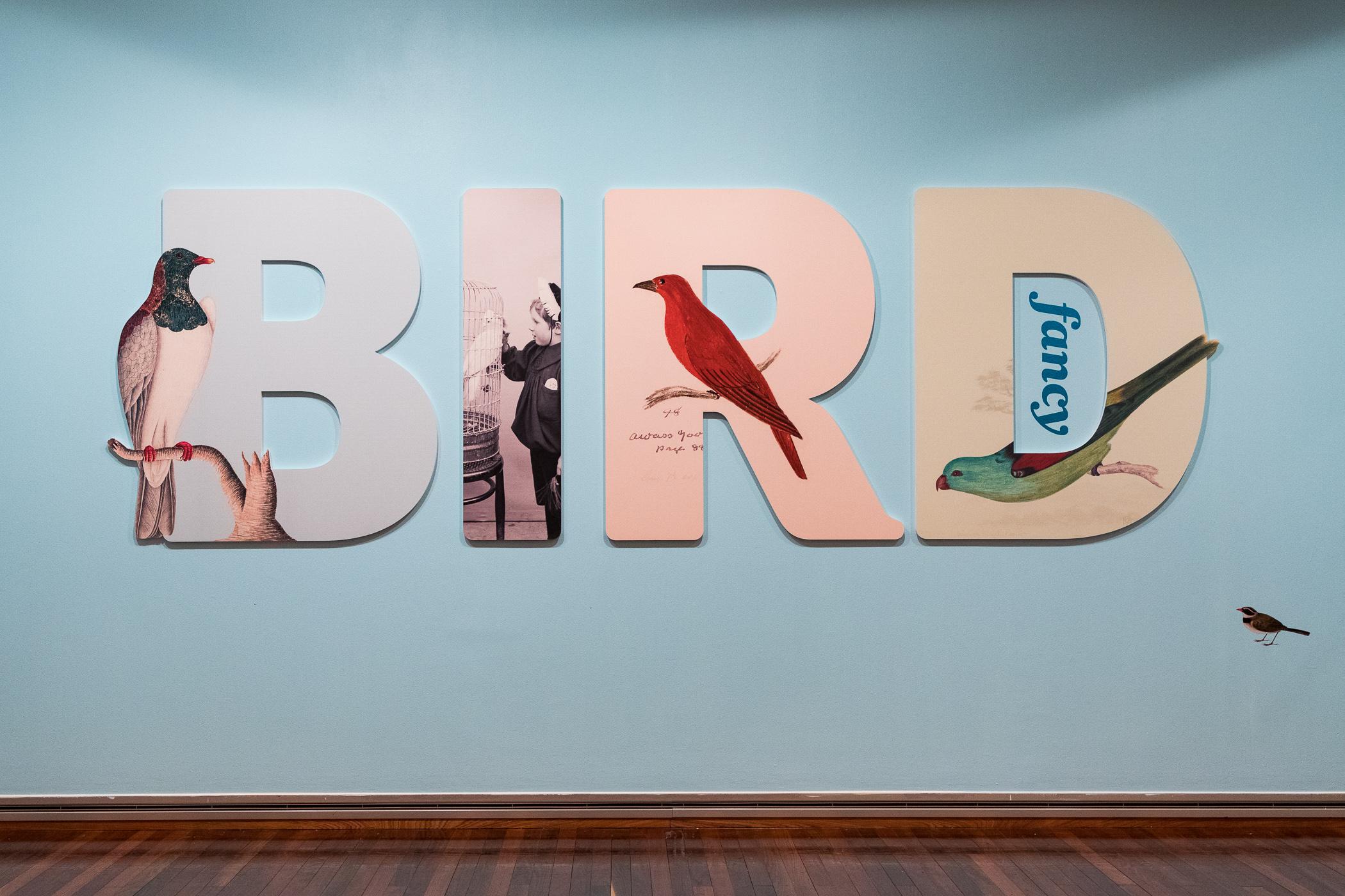 20190410_NL_PE_TPFG_Bird_Fancy_opening_005.jpg