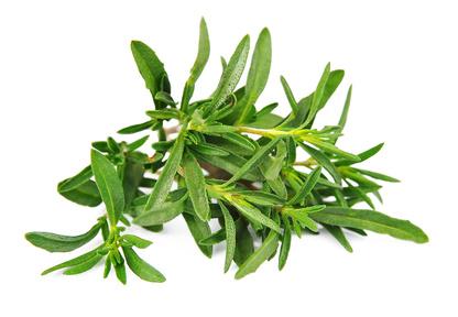 thyme leaves_48429007_XS.jpg