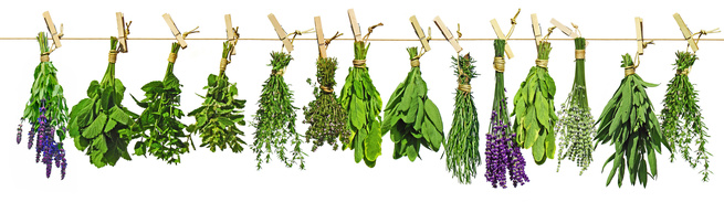 Herb bunches hanging_123207042_XS.jpg