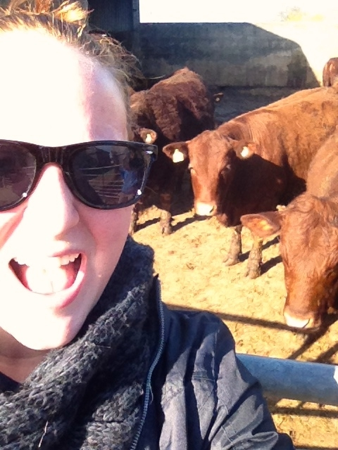 Selfie with the cows! When I worked on a farm in Devon, UK