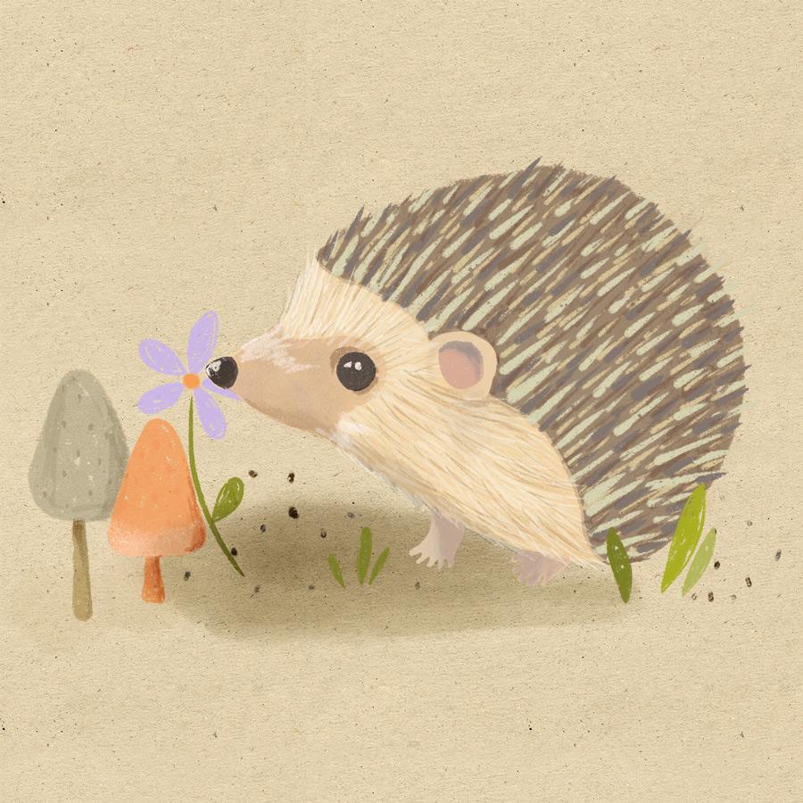 hedgehog-final-instagram.jpg