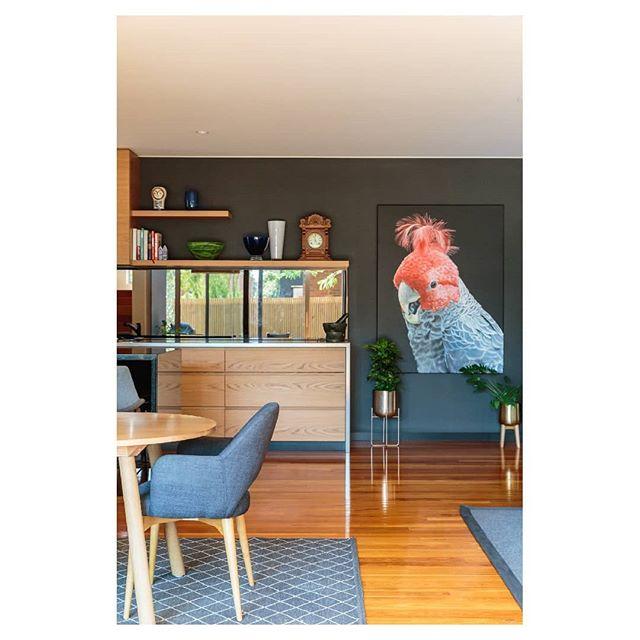 Good morning 😍 Architect: @pleysierperkins Builder: @visioneerbuilders ⠀⠀⠀⠀⠀⠀⠀⠀⠀ ⠀⠀ ⠀⠀⠀⠀⠀⠀⠀⠀⠀ ⠀⠀ ⠀⠀⠀⠀⠀⠀⠀⠀⠀ ⠀⠀ ⠀⠀⠀⠀⠀⠀⠀⠀⠀ ⠀⠀ #canonaustralia #architecturemelbourne #interiordesignmelbourne #archdaily #lr_moments #ozshotmag #takemetoaustralia #seeaustralia #interiordesign #discoveraustralia #letsgosomewhere #exploreaustralia #australiagram #architecturephotography #liveauthentic #explorecreate #creativelife #wanderlust #roamtheplanet #interiordesigncollective  #wildernessculture #planted #instagood  #productphotography #productphotographymelbourne #commercialphotographymelbourne