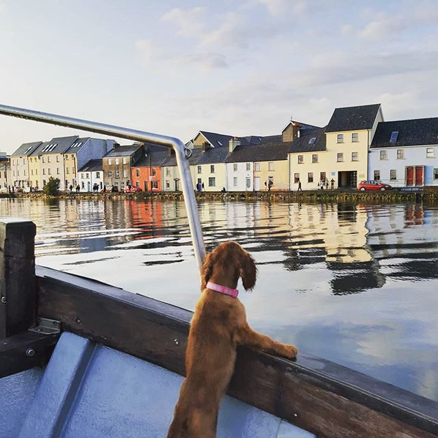 """""""Looks like the wind is picking up Skipper!!.....Yeah I think you're right there Phoebe"""" . . . . . #shipsdog #onlookout #dogsofinstagram #galway #galwaybay #boattours #visitgalway #visitgalway #discovergalway #claddagh #niceday #longwalk #firstmate #bestofireland"""