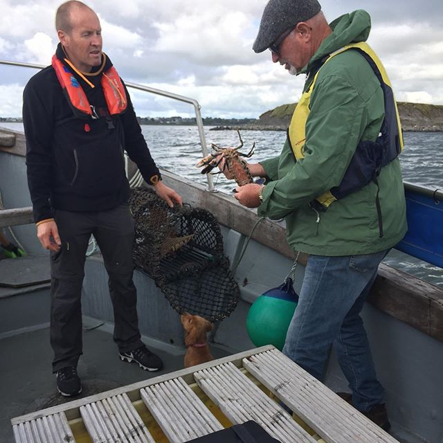 Another fun day out on the bay with @galwayhooker2020 and @galwaybaytours. Lobster pots, blue skies, enthusiastic guests and a very inquisitive Phoebe. What a morning!!! . . . . . . #shipsdog #firstmate #mansbestfriend #fishing #boattours #lobster #claddagh #visitgalway #galway2020 #discovergalway