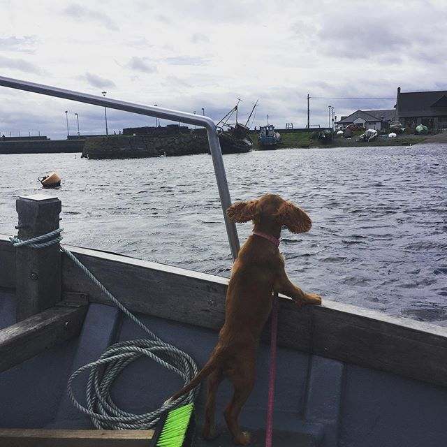 What's that you say Skipper?..... @lisareganpr was on the airwaves all this week!!! The city is buzzing with all she talked about. What an epic part of the world we live in. Galway....you beauty! I think I'd like to meet @tobyonhenrystreet and get him out on the Hookers. . . . #galwaybayfm #galwayhookers