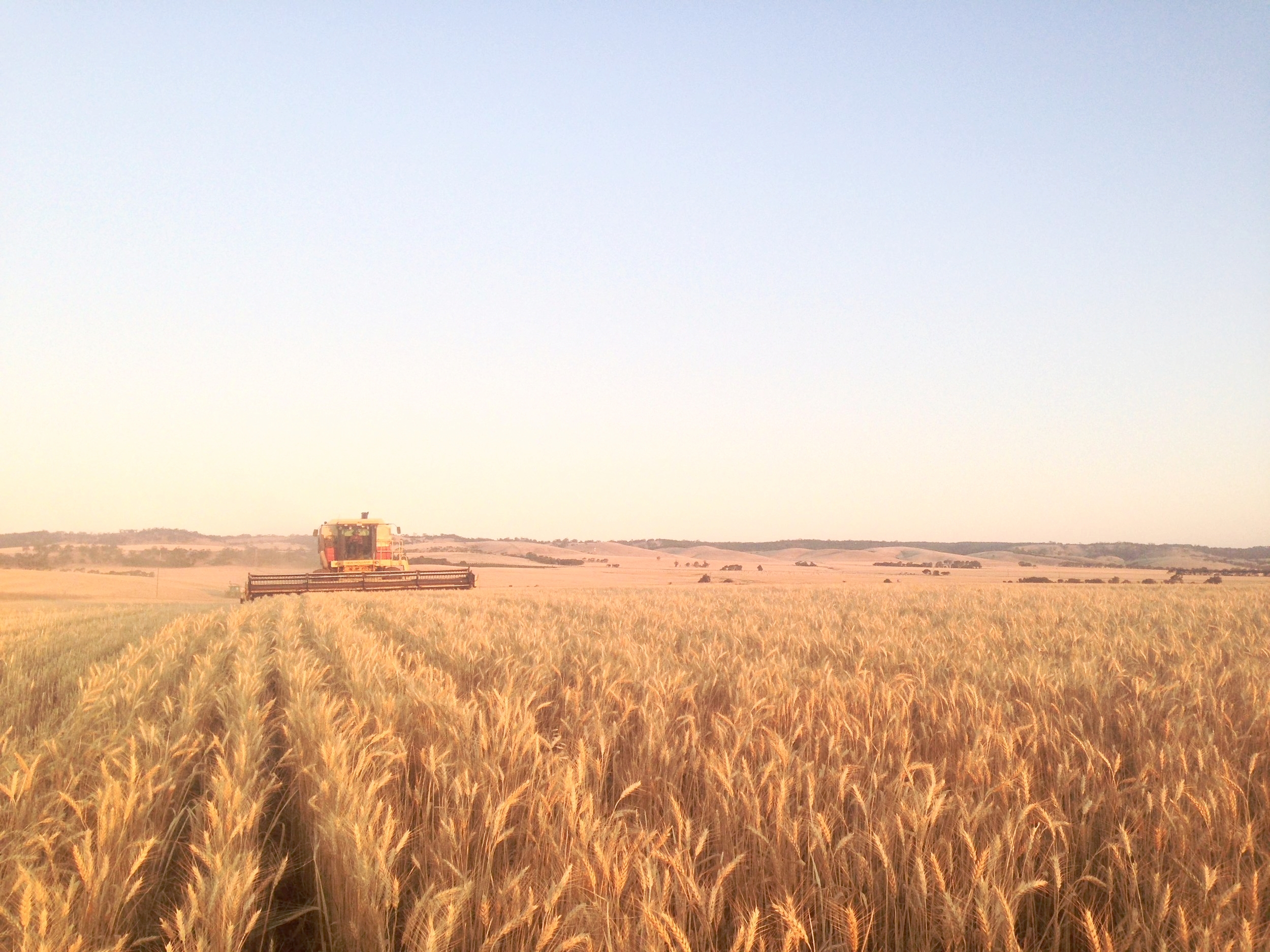 Harvest-Clare-Valley-South-Australia