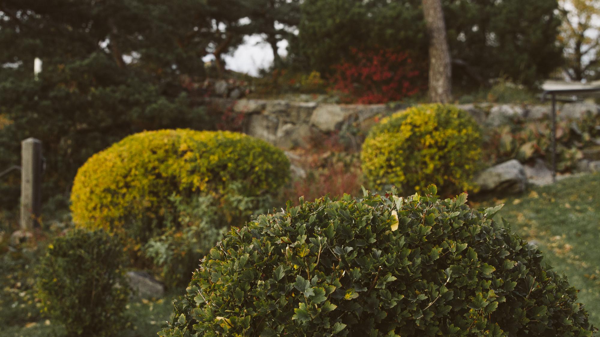 Trädgårdsskötsel ⎯  Läs mer
