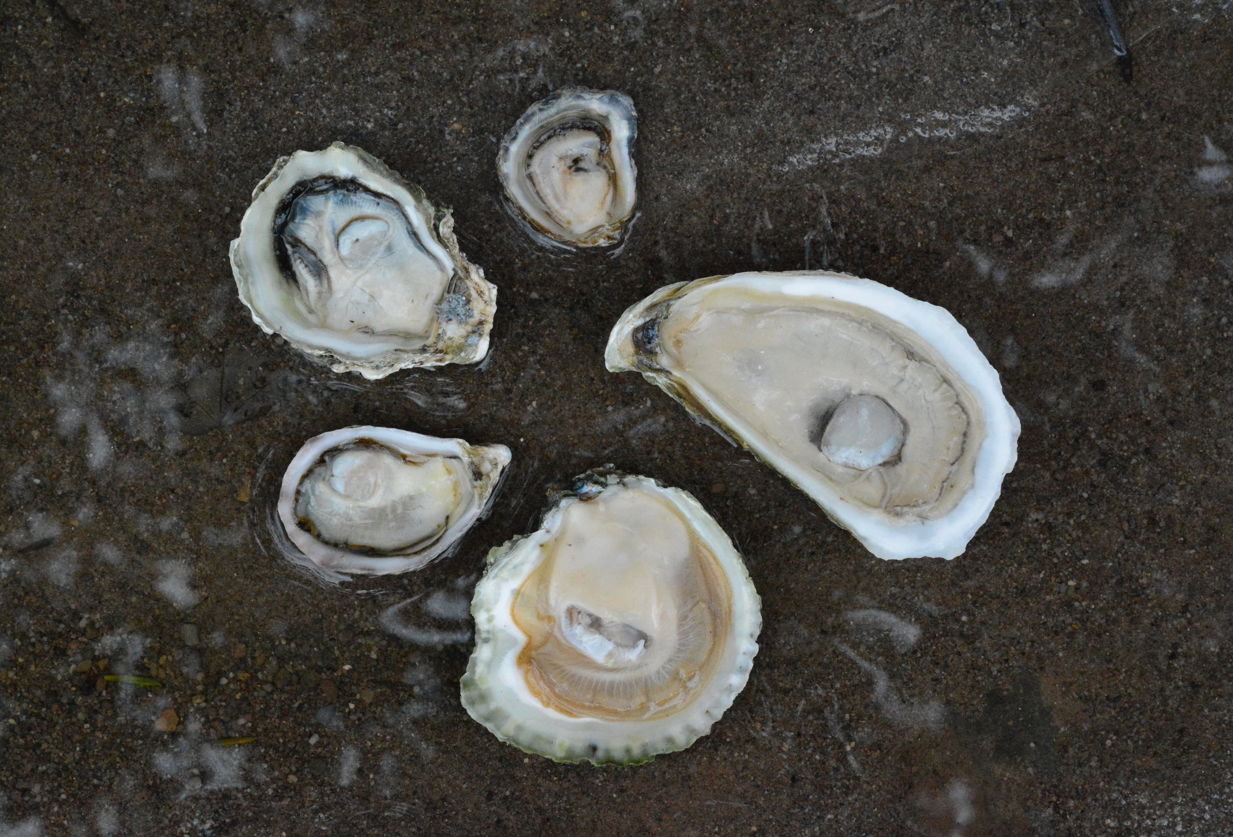 INTERNATIONAL OYSTER DAY