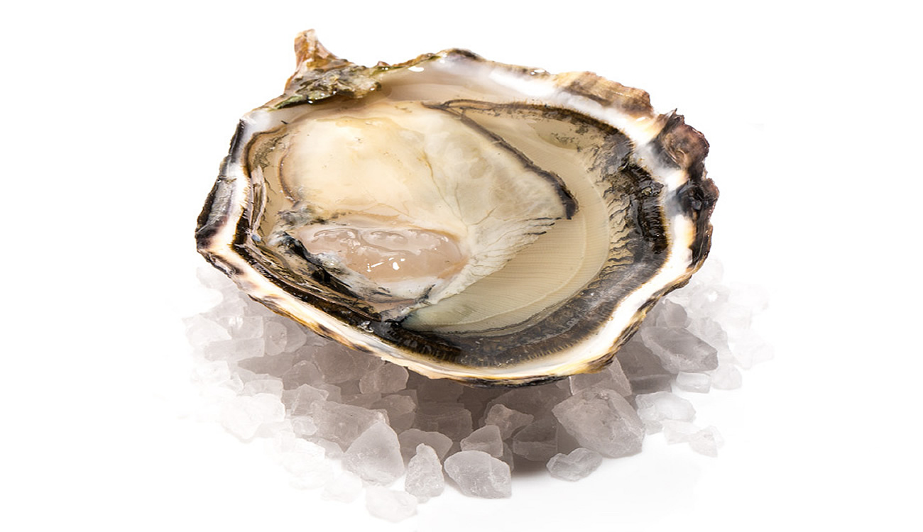 capital-oyster-meat.JPG