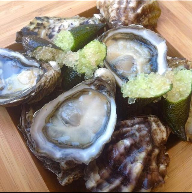 """This is Kumo Grandé - a giant """"Kumamoto"""" (Crassostrea Sikamea) grown in Baja California, Mexico. 360 are in NY and ready from Ostra Libre - Mexican Oyster Showcase on Friday.  We will also be bringing 1000 of these suckers.  Buy tickets 🎫 at www.NewYorkOysterWeek.com  #oysters #NYOW #NYoysters #Mexico #sustainable #luxury #slurp #shuckit #awshucks #newyorkoysterweek"""