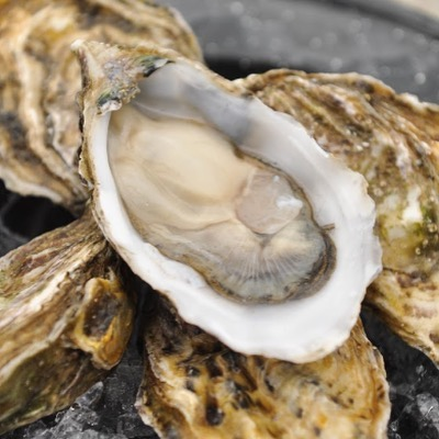 """AY DIOS MIOS! The lineup of oysters for ¡Ostra Libre! is LOCO! We've got 1,080 Mexican (Pacific) Oysters including 360 """"Kumamoto Grande"""" and another 360 Ultra Premium West Coast Oysters including Taylor Kumamoto, Shigoku and Frillionaire from WA & BC. Surprise selection for East Coast Product to be revealed at the event where about 100 People are going to GORGE on these DelicaSEAS!  #MexicanOysterShowcase  #oysterweek #NYOW #mexico #kumamoto  #oysters"""