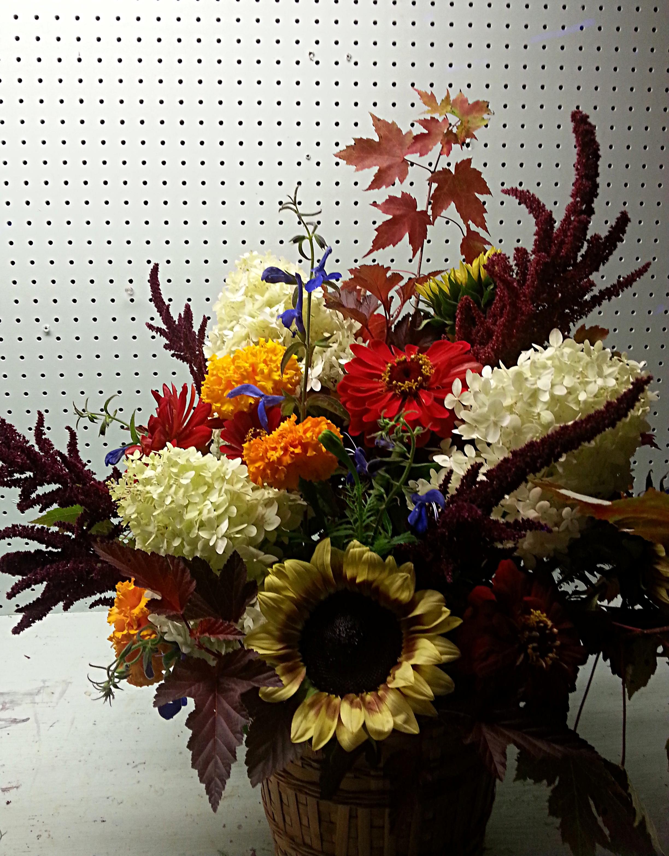 Sunflowers, Amaranthus, Zinnias, Dahlias, Marigolds, Salvia, Hydrangea, Viburnum, Maple