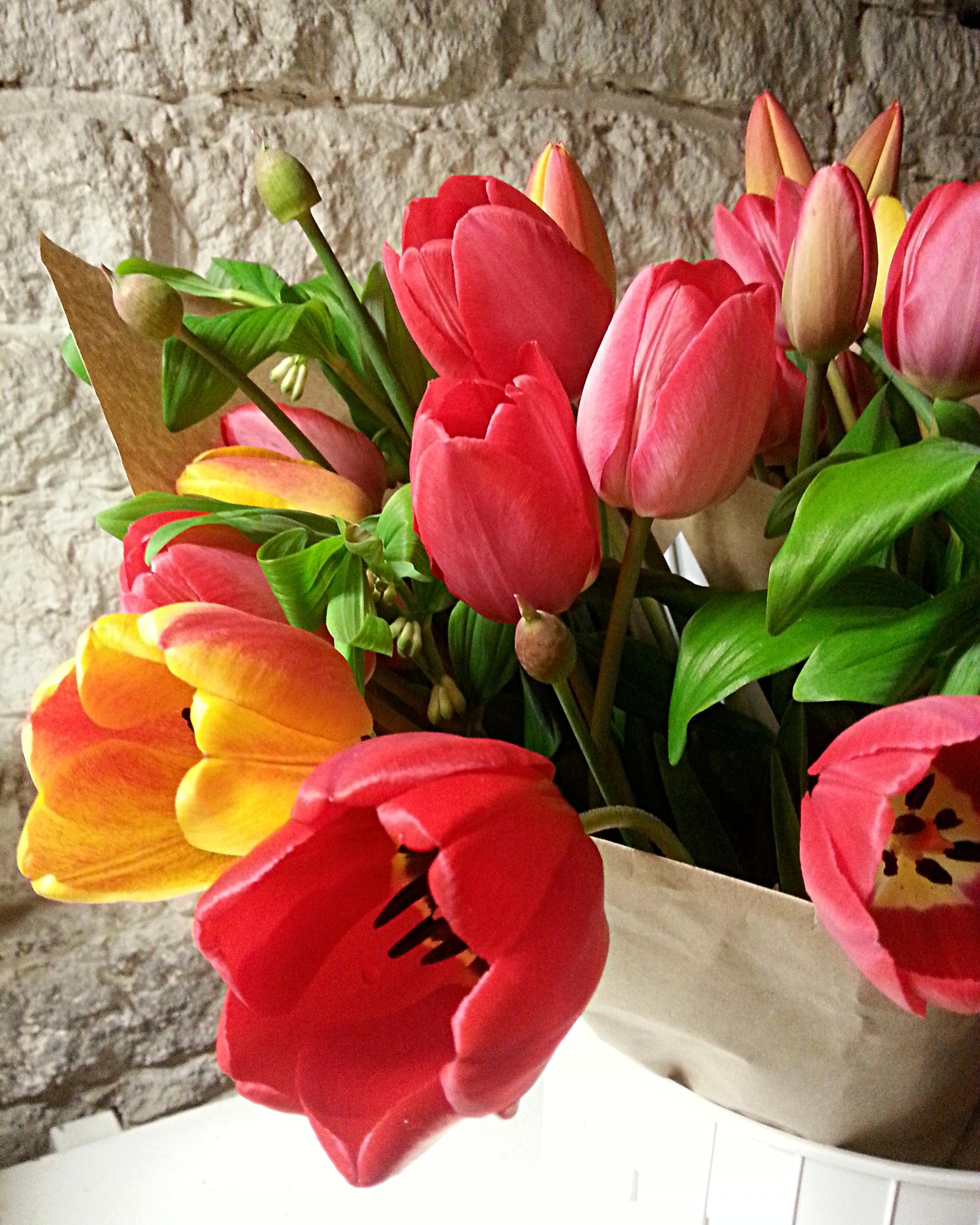 Tulips, Allium, Solomon's Seal