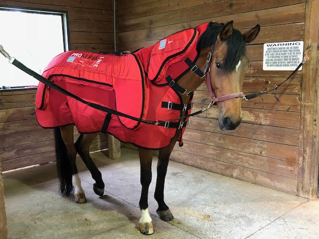 Alison's horse enjoying a session in her Pro Series 3-1.