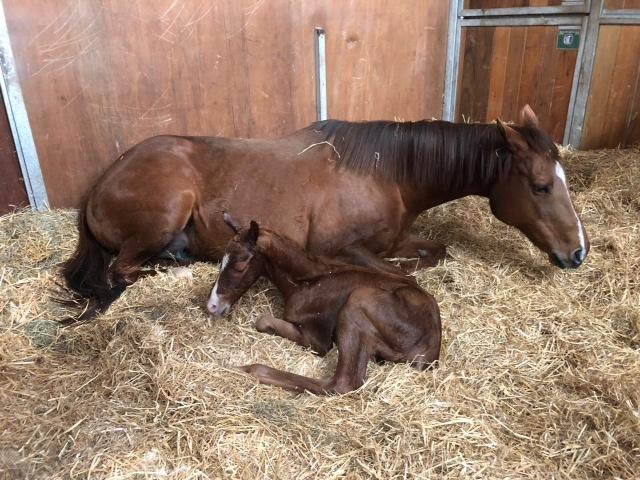 Kasumi colt foal 3.05pm 22.02.18 (2).JPG
