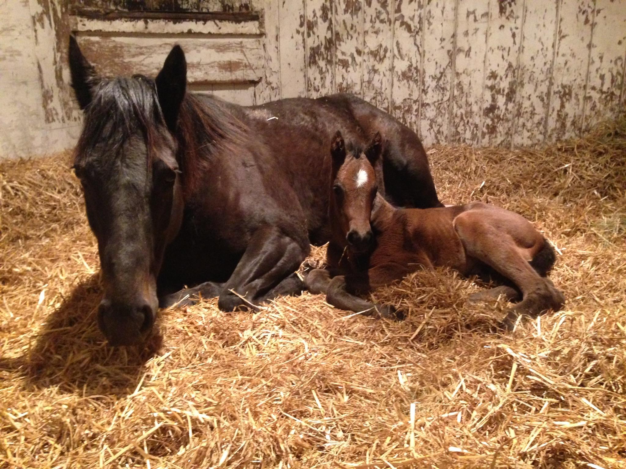 Frangipani colt foal 5pm 22.2.18 (3).JPG